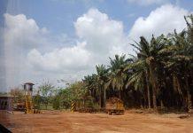 Perkebunan Sawit Sinar Mas Manfaatkan Limbah Sawit