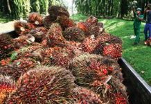Sektor Kelapa Sawit Tak Pernah Lepas dari Kampanye Negatif