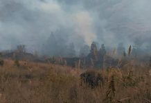 Kebakaran Hutan Guntur Tidak Ganggu Wisata Cipanas