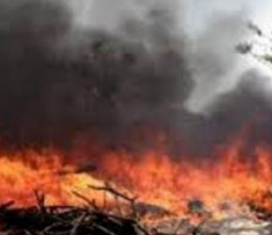 Ratusan Hektar Lahan Gambut di Penajam Terbakar