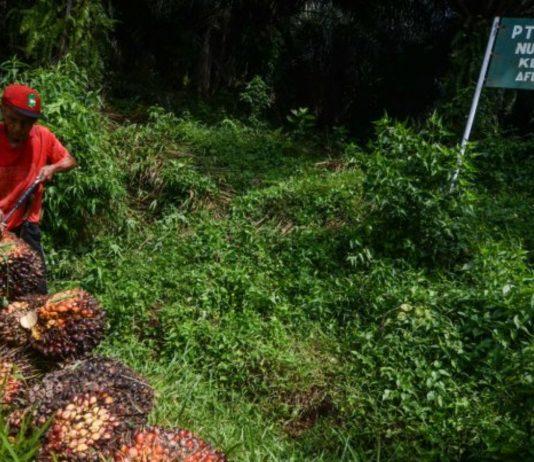 UE Dukung Indonesia Capai Target Minyak Sawit Berkelanjutan