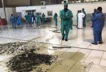 Serangga di Masjidil Haram