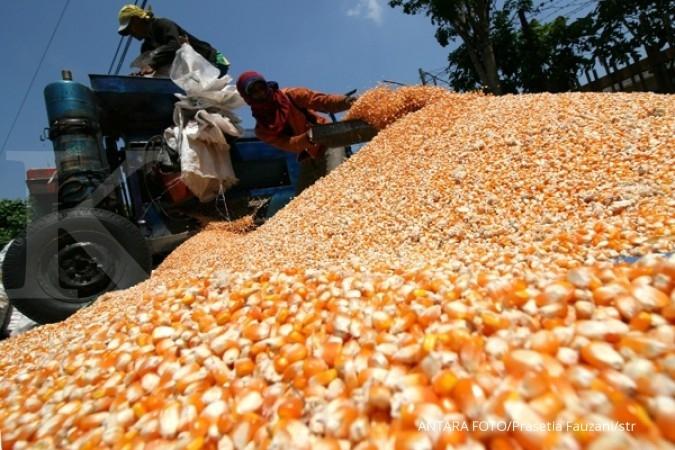 Pekerja merontokkan bulir jagung dari tongkolnya dengan menggunakan mesin di Desa Paron, Kediri, Jawa Timur, Selasa (25/8).
