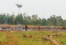 Polisi Tangkap Tiga warga Kotawaringin Timur Diduga Pembakar Lahan