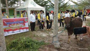 Pelindo III dan Kajari Pulang Pisau.menyerahkan hewan qurban kepada Muhammadiyah Pulang Pisau (doc.mpi)